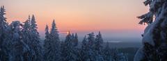 Sunset at Puijo (Jyrki Salmi) Tags: jyrki salmi puijo kuopio finland winter evening sunset snow forest outdoor