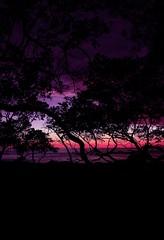 AVELLANAS Guanacaste (JoanZoniga) Tags: guanacaste playa praia sunset dusk silhouettes santacruz jczuniga playaavellanas avellanas tamarindo puravida travel traveling canon photography centralamerica americacentral centroamerica northernpacific northpacific playanegra playatamarindo afterlight lastlight sky skyporn