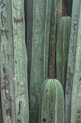 Le Jardin majorelle (thecuriousdead) Tags: morocco aftrica souk marrakech november 35mm film canon colourprocess oldfilm negatives documentary majorelle lejardinmajorelle majorellegarden yvessaintlaurent ysl museum gardens blue colour pink nature
