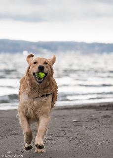Raiden Tennis Ball