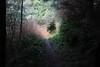 From dark to light (rozoneill) Tags: cape mountain berry creek siuslaw national forest hiking oregon florence princess tasha scurvy ridge trail nelson coastal