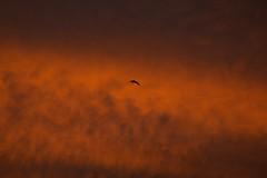 First Sunrise 2018, Elche, Alicante, Spain (José Rambaud) Tags: sunrise amanecer sunlight cielo sky skycape elche elx alicante alacant comunidadvalenciana comunitatvalenciana rojo red 2018