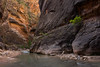 Exploring the Narrows (Matt Williams Gallery) Tags: mattwilliamsphotography nikon d7100 zionnationalpark zionnarrows zion river virginriver utah canyon americansouthwest hiking water light nature naturephotography northcarolinaphotographer travel travelphotography exploring longexposure narrows