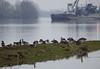 Hoogwater 2018 17 (megegj)) Tags: gert hoogwater flood
