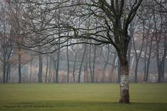 Trees in Alaunplatz (J. Zweig) Tags: nikon nikond5200 d5200 lightroom lightroomclassiccc paisaje landscape dresden germany deutschland alemania europa europe eu nature naturaleza mist niebla