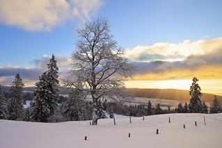Sunrays at Tête-de-Ran - Neuchâtel - Switzerland