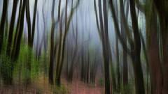 Cloud Forest (Jörg Bergmann) Tags: islascanarias lagomera laurisilva lorbeerwald nationalpark nebelwald parquenacionaldegarajonay unesco blurred canarias canaryislands cloudforest españa fog forest gomera laurel mist motionblur spain trees gf7 mft m43 lumix microfourthirds micro43 panasonic panasonic20mmf17 20mmf17 20mm hss