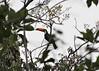 Pantanal (259) (kmw37a) Tags: pantanal brazil toucan tocotoucan