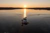 (CarolienCadoni..) Tags: sony sonyilcaa99m2 swans lake sun sundown sunset light lofar buinen drenthe nederland netherlands