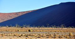 In the shadow of the dunes. (pstone646) Tags: dunes sanddunes namibia desert namib trees shadow bluesky africa sunrise sossusvlei landscape view