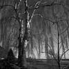 Birch at Brabrand Church (K.Pihl) Tags: yellowfilter hasselblad500cm tree rodinal1100 film analog blackwhite distagon50mmf40 winter brabrandsø ilfordhp412564 bwfp