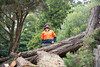 Tree_Risk_Assessment (Tree Access) Tags: belgrave clients treeaccess family