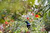 SunBird (SujithPhotography) Tags: savekaggadaspuralake savelakes savebangalorelakes saveenvironment savehabitat bird sunbird