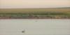lake-connewarre-2734-ps-w (pw-pix) Tags: water lake estuarine estuary paddocks trees shrubs reeds grass mist haze birds swans swimming hills morning sunrise quiet calm ripples staceysroad connewarre neargeelong geelong victoria australia