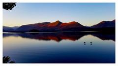 Sunrise skimming... (mandysp8) Tags: snow winter horizon lake birds sunrise reflections uk keswick lakedistrict nationalpark