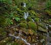 Split-Rock-Track-Waterfall (ShirleyC059) Tags: mossy rocks waterfall tasmania australian split rock track cascade ferny