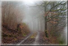 december fog with a handful of light (friedrichfrank1966) Tags: fog foggy light december dunst haze wald natur nature licht day forest trees bäume walk wanderung white