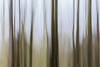 Intentional Camera Movement (Pittypomm) Tags: week3 2018p52 icm intentional camera movement trees hedge green blur abstract lines parallel