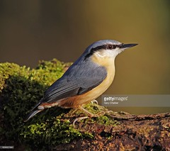Nuthatch (Gary Chalker, Thanks for over 3,000,000. views) Tags: nuthatch bird pentax pentaxk3ii k3ii pentaxfa600mmf4edif fa600mmf4edif fa600mm 600mm