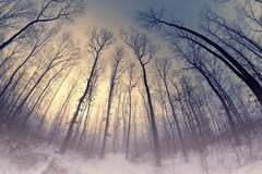 0707 Winter Forest II (Hrvoje Simich - gaZZda) Tags: morning sunrise misty fog winter landscape outdoors noperson slavonia croatia europe nikon nikond750 samyang1228 gazzda hrvojesimcih