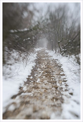 Lensababy 6 (Outlaw Pete 65) Tags: paesaggi landscapes alberi trees rami branches bosco wood strada road neve snow inverno winter nikond600 lensbabycomposer brescia lombardia italia