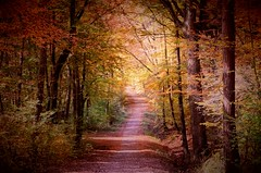 Path through the Woods (DrQ_Emilian) Tags: nature fall autumn colors light details sunlight sunshine woods trees forest path road wanderlust beautiful outdoors travel explore walk stetten kernen remstal badenwürttemberg germany europe photography hobby countryside rural mood