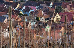 Alsace - Katzenthal - View from the vineyards (roberto parravicini) Tags: tetti roof vineyards vigne roofs hautrhin alsace alsazia