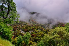 A Mountainside Hidden in the Clouds (thor_mark ) Tags: nikond800e day9 triptopasoroblesandyosemite sequoianationalpark alonggeneralshighway lookingne capturenx2edited colorefexpro sequoiaandkingscanyonnationalparks unescosequoiakingscanyonbiospherereserve sequoiakingscanyonbiospherereserve outside landscape nature pacificranges sierranevada sequoiasierranevada westernsequioakingscanyonarea hillsideoftrees trees lowclouds mountains mountainsindistance mountainsoffindistance cloudsacrossvalley cloudsaroundmountains cloudsinvalley hiddeninclouds mountainside generalshighway narrowwinding switchbacks generalshwy project365 california unitedstates