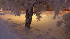 IMG_4351 (Mr Thinktank) Tags: raureif frost