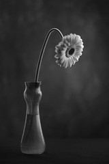 Floating Flower (Bert Pot) Tags: flower vase stilllife studio flowerpower nikon nikond800 d800 85mm jugendstil