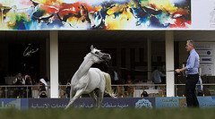 Dancing ! (Meshari Fahad) Tags: canon7d arabian horses show festival light sport animal dance