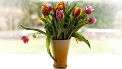 The Colors of Spring (picsessionphotoarts) Tags: fineart stilllifephotography stillleben nikon nikonphotography nikond750 stilllife bunchofflowers blumen flowers blumenstraus 169 tulpen tulips