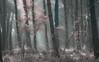 Les arbres (david49100) Tags: 2018 90mm janvier janvier2018 maineetloire seichessurleloir tamron90mm arbres d5100 nikon nikond5100 tamron trees