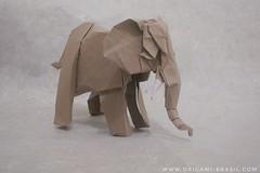 30/365 African Elephant by Roman Diaz (origami_artist_diego) Tags: origami origamichallenge 365origamichallenge 365days elephant