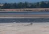 0106 (327) - A very windy beach! (Zana Benson) Tags: beach blowingsand standrews wind