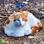 Chucky en modo rosca #gatos #gatoscallejeros #cats #photocats #instacats #neko #meow #gatze #gatto #koshka #catsofworld #catsofinstagram #streetcats #chat #barcelonagatigos thumbnail