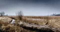 Winter Wasserlauf (Beppe Rijs) Tags: deutschland landschaft schleswigholstein germany schlei landscape natur nature field feld gras horizont horizon clouds grau grey farbig colored blue blau winter frost