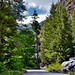 Trees All Around While on the Stehekin River Road (North Cascades National Park Service Complex)