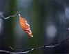 The Pendulum / Das Pendel (Gabi Wi) Tags: blatt leaf dof forest wald light licht bokeh petzval