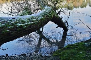 Winter in einem Naturschutzgebiet - Winter in a nature reserve