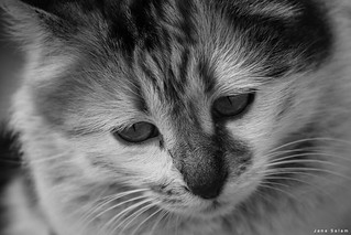 #catlovers #pets #photooftheday #blackandwhitephotography #photographyoftheday #photo_art #pic #blackandwhite #portrait
