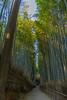 Arashiyama - 05 (raelala) Tags: autumn canoneos7d asia travelphotography fallleaves worldtravel travel arashiyamabambooforest thatlalagirlcom fall thatlalagirlphotography nippon thatlalagirl kyoto photographybyrachelgreene fallcolors fallfoliage japantrip autumncolors japantravel november2017 honshu kansai meanwhileinjapaning2017 autumn2017 arashiyama japan autumnleaves