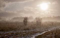 Sunny Snowstorm (Julian Barker) Tags: hemington sawley marina nottingham warren lane sun low sunset storm snow shower backlit backlighting winter contre jour canon dslr julian barker