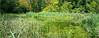 Partie humide du jardin botanique expérimental Jean Massart, Auderghem, Bruxelles, Belgium (claude lina) Tags: claudelina belgium belgique belgïe canon bruxelles brussel auderghem jardin garden jardinbotaniqueexpérimentaljeanmassart étang marais