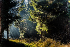 Catch the Rays (*Capture the Moment*) Tags: 2016 forest licht lichtstrahlen light lightbeam rayoflight sonnenstrahlen sonya7m2 sonya7mii sonya7mark2 sonya7ii sonyfe2470mmf4zaoss sonyilce7m2 wald winter