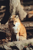 DSCF8165.jpg (桜夜つばさ) Tags: 白石市 宮城県 日本 jp