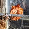 January (Bernhardt Franz) Tags: january januar window gitter grid leave wood metal cobweb colour nature