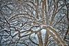 Snow Day (Jack Beaman) Tags: trees snow days cold weather