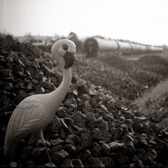 Trainspotting (efo) Tags: bw altix atissa eho 24x24 square flamingo plastic train railroad tankcar richmond california