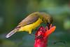 DSC_5131 (melvhsc100) Tags: nature wildlife park garden greenery bird colors bokeh singapore singaporenicescenery nikon7200 tamron150600mm closeup